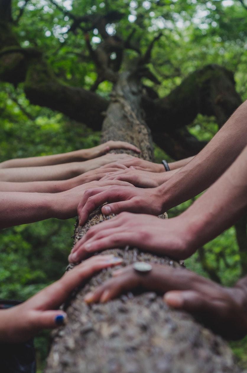 Lebemensch-Angebot-fuer-Unternehmen-Haende-Baum